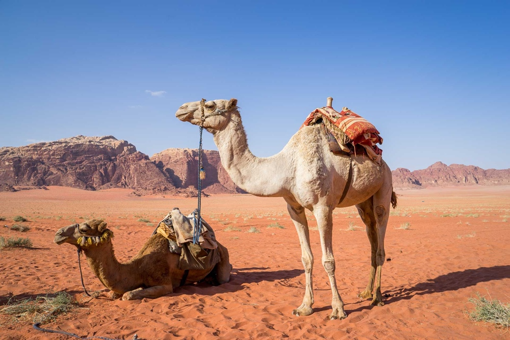 Jordanien Geschichte Tour Entertain Tours
